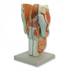 Kit electroforesis seroproteínas. 25 x 8 test