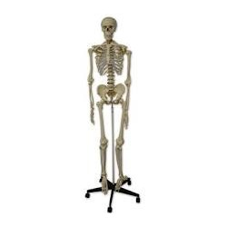 Acido folico automatizable 201510 ml