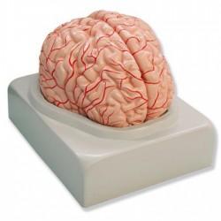 Cinta indicadora esterilización para autoclave