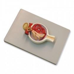 Contador manual 8 teclas
