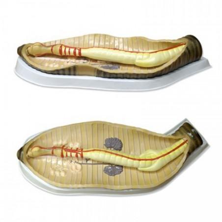 Detección multi drogas inmersión 7m. 25 test
